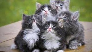 ПРИКОЛЫ Смешное видео с кошками 2016 - Самое лучшее!