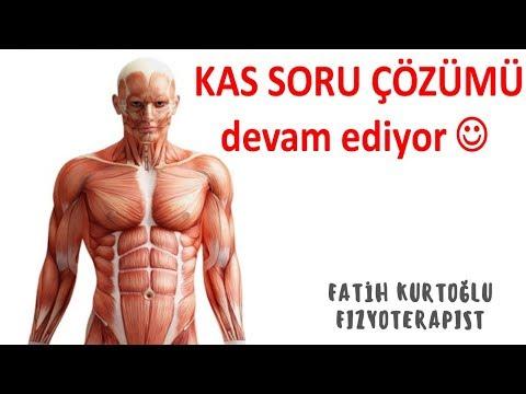 Konu Özetli-Kas | Anatomi Öğreten Örnek Sınav Soruları 9