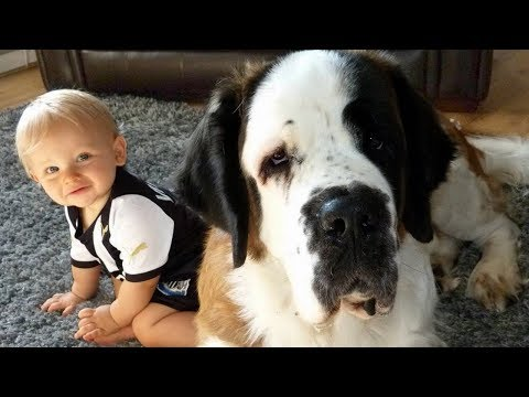 Big Dog and Baby Videos 2018