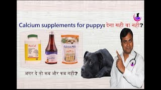 Calcium Supplements for Puppy/Dog: To Give or Not? ( Hindi )