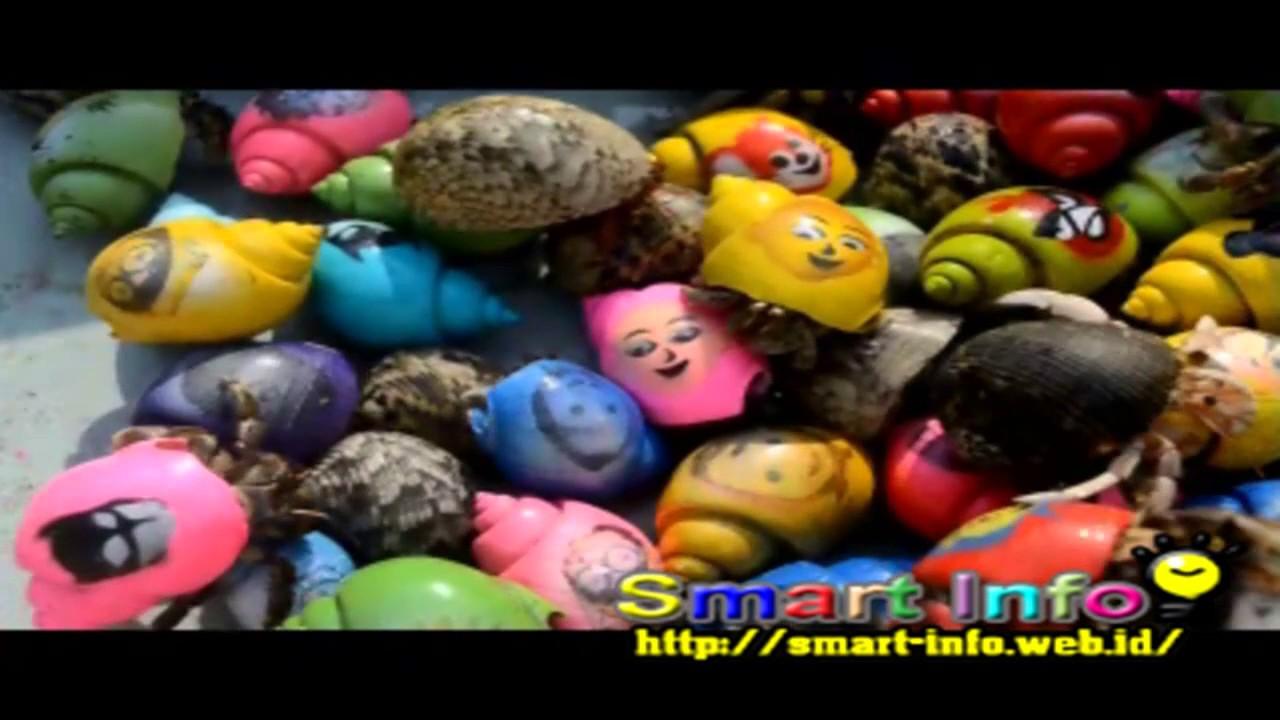 Mainan Anak Umang Keong Kartun YouTube