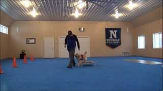 Nora (golden Retriever) Dog Training Video