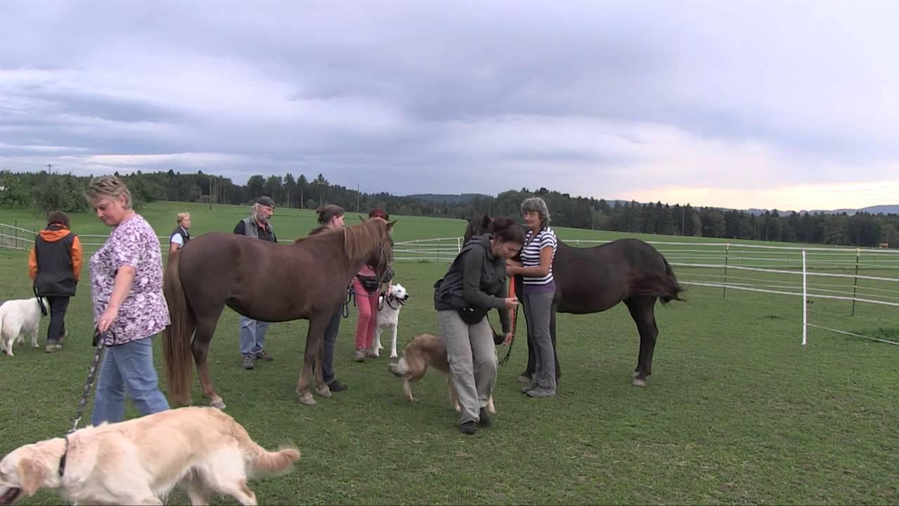 hund und pferd  youtube