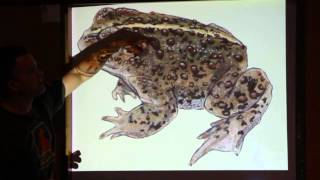 Drawing Reptiles and Amphibians