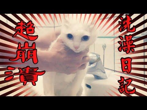 【豆漿 - SoybeanMilk】貓咪洗澡到底有多崩潰 豆漿來告訴你