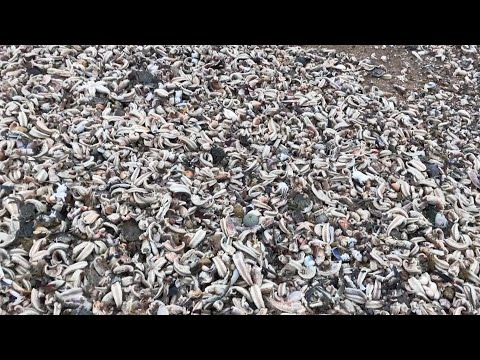 Thousands Of Starfish Washed Ashore After UK Storm