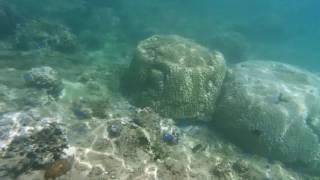 青の洞窟がある真栄田岬から歩いて3分程の場所にある裏真栄田岬と呼ば...
