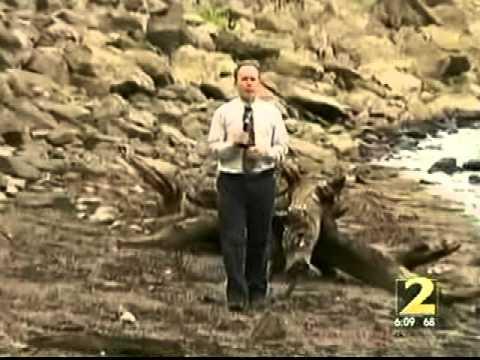 Georgia Drought  on WSB-TV