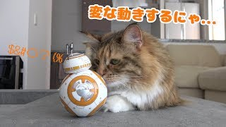 スターウォーズ BB-8と猫の会話が可愛いかった!...