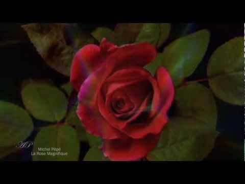 ♡ Michel Pépé - La Rose Magnifique - Elixir d'Amour