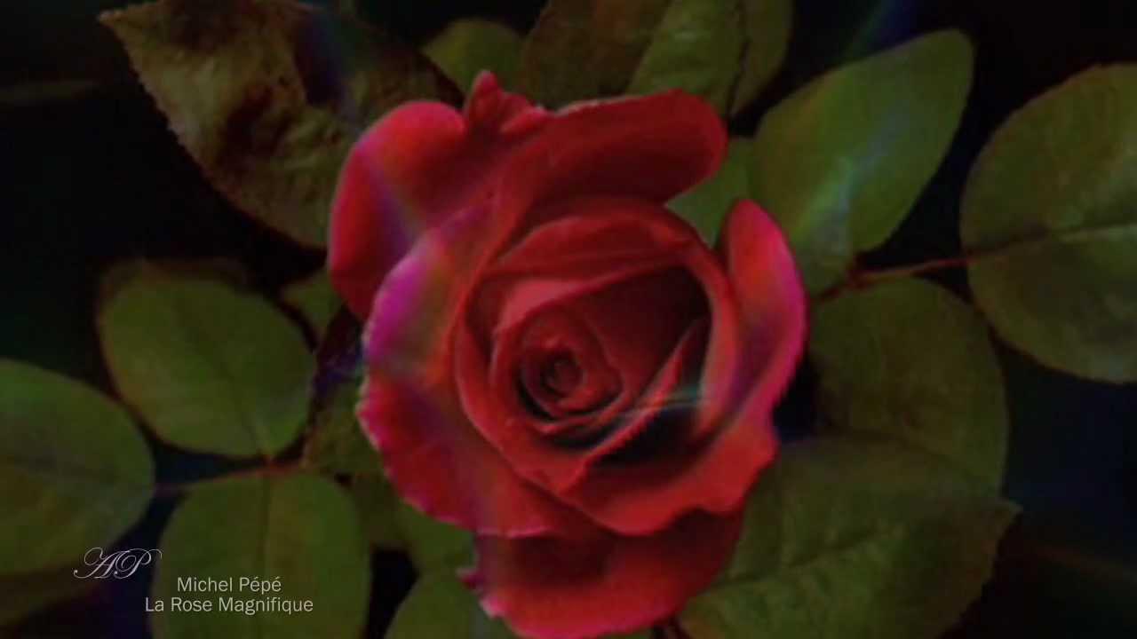 Michel Pépé La Rose Magnifique Elixir Damour