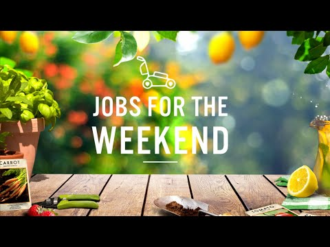 Summer: week 11  | Jobs for the weekend | Gardening Australia