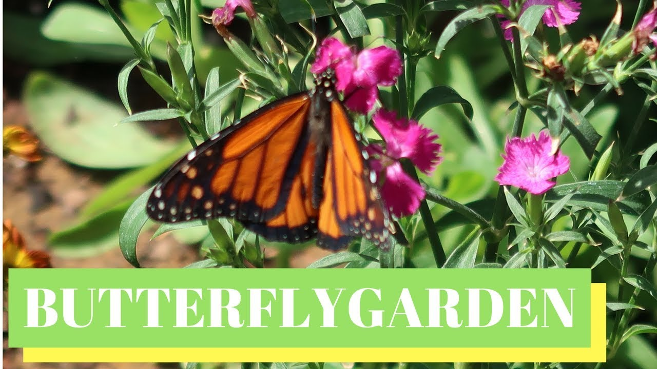 epcot flower & garden festival 2018 | butterfly garden