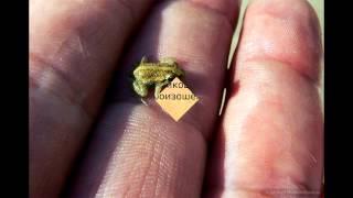 Самые маленькие животные мира