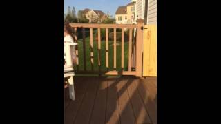 Izzy dancing on porch. Potty setback