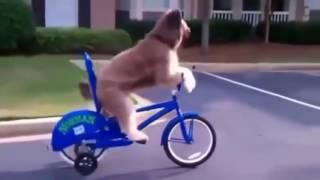 Угарное видео про животных НОВИНКИ
