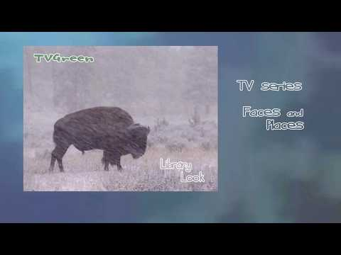 FaunaView: Yellowstone National Park - Bison Encounters
