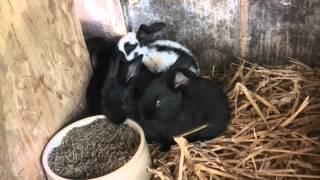 Die Kaninchenbabys mit 3 und 4 Wochen