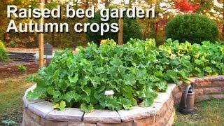 Fall & Winter Raised Bed Garden - Kale, Collards, Turnip Greens