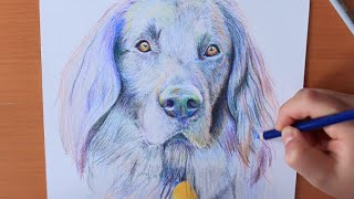 Drawing Dog: Flat Coated Retriever | RACHEL RIE