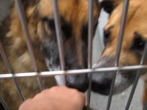 SEAACA Shelter Downey ,CA18-2184418-19366 VERY FRIENDLY! PAST DUE!