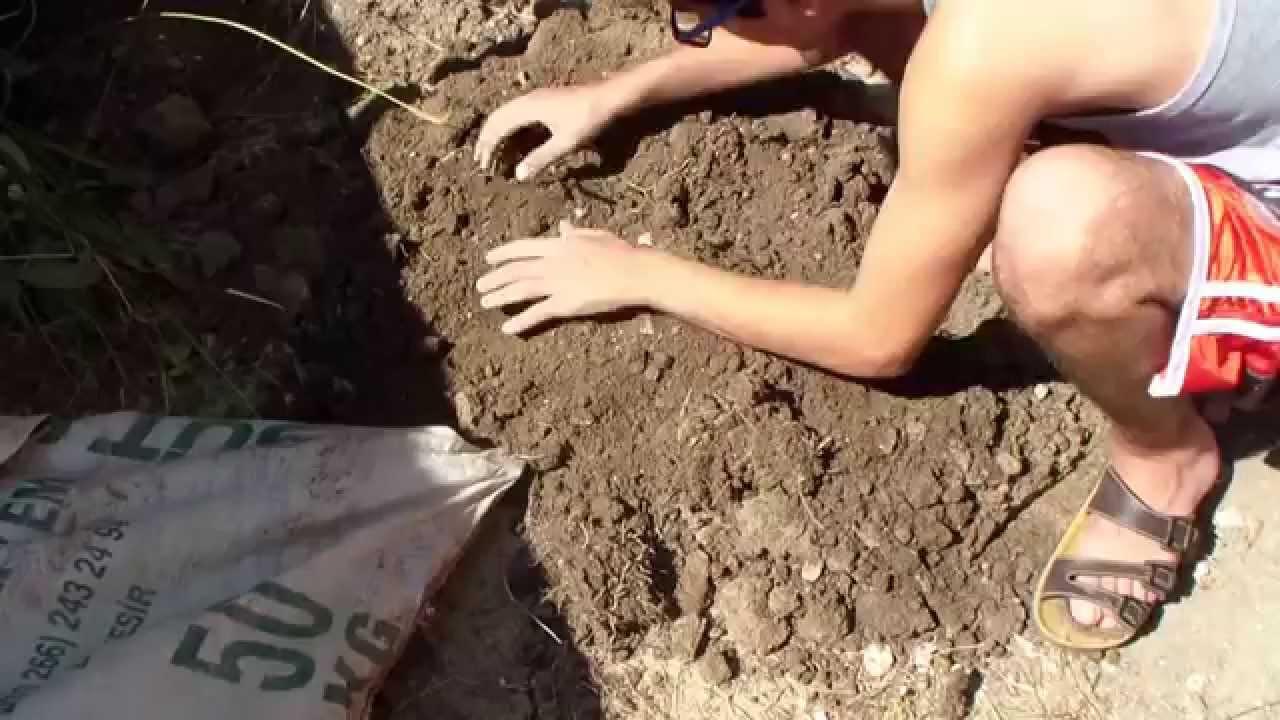 Patatesleri bir torbada nasıl yetiştirebilirim Patates yetiştirme yöntemleri