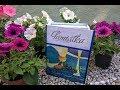Pudełko-książka 1 Komunia Święta/ Box-book 1 Holy Communion
