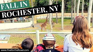 Halloween Fun in Rochester, New York | Halloween at Seneca Park Zoo | ZooBoo | Family Travel Vlog 14