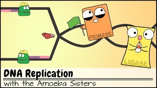 Dna Replication Updated Youtube
