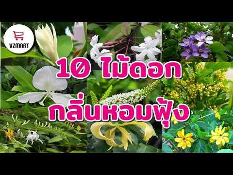 10ไม้ดอกกลิ่นหอมฟุ้ง   VZMART