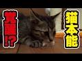 27日目。まるで猫(人)が変わってしまった子猫!〜Kitten hunter!〜