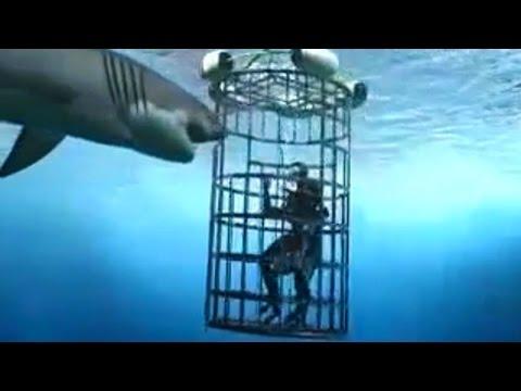 6 Horrific Shark Attacks Caught On Tape