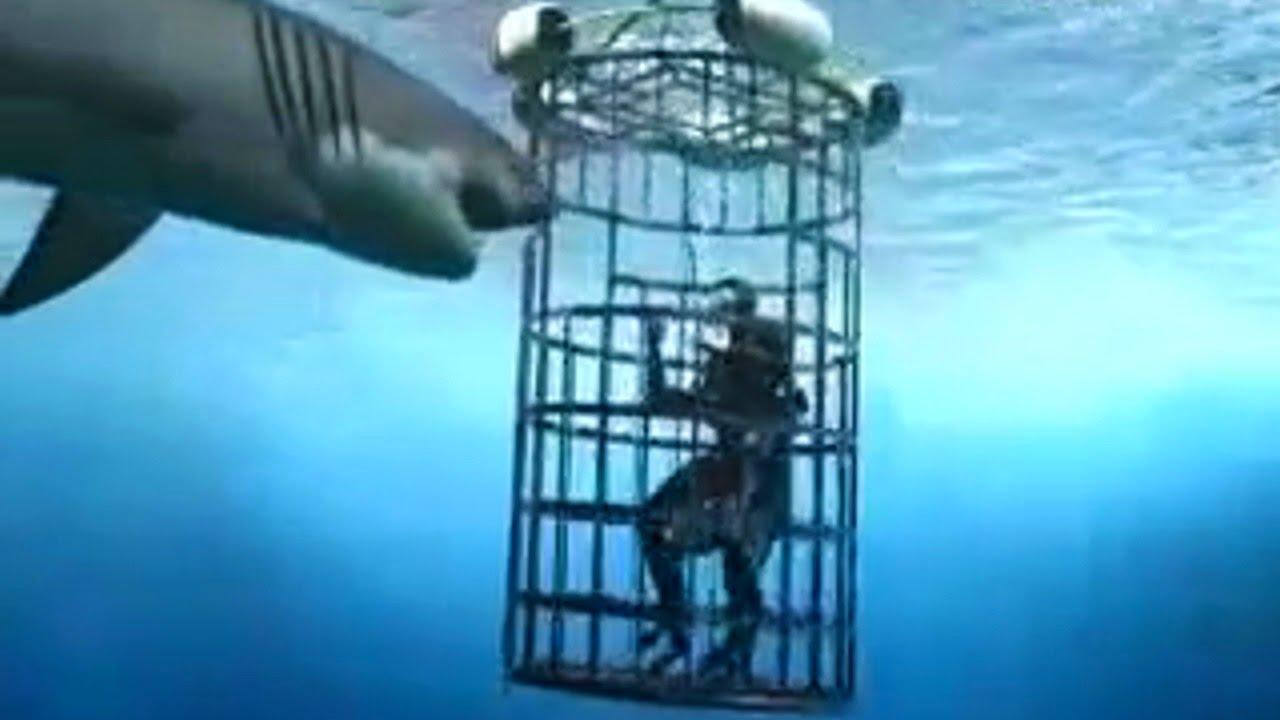 Download 6 Horrific Shark Attacks Caught On Tape
