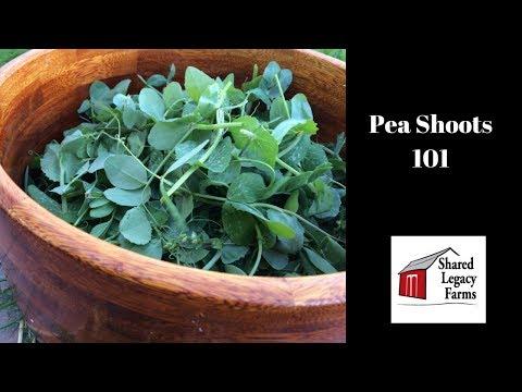 Pea Shoots 101