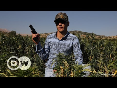 Lebanon's Hash Industry | DW English
