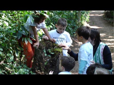 Educação Ambiental Infantil -  Educação Ambiental