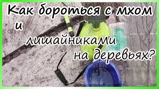 видео Лишайник на деревьях: как избавиться