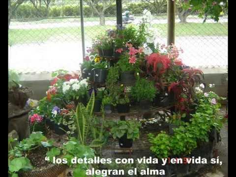 Vivero jard n plantas lindas regalos vivos bien for Viveros y jardines