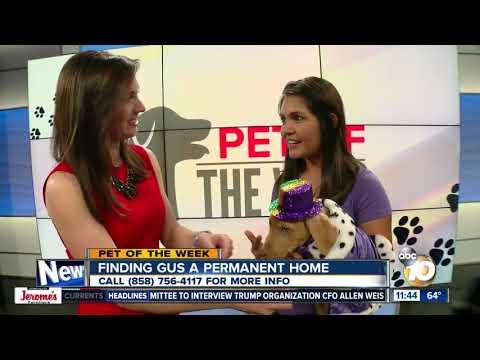 10News Pet of the Week: Gus