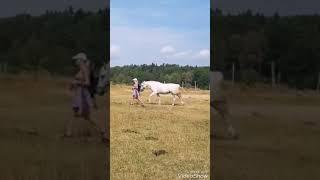 Horse follows girl everywhere