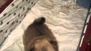 Najnovije Fotografije štenaca - Puppy.wmv