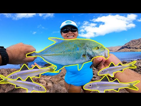 Best Live Bait For Shore Fishing In Hawaii | Whipping Fishing In Hawaii | Hawaii Fishing | Oama Bait