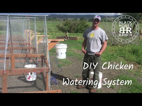 Low Cost DIY Chicken Tractor Waterer