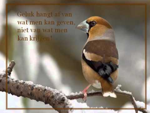 spreuken met vogels GELUK spreuken met vogels WiWi   YouTube spreuken met vogels