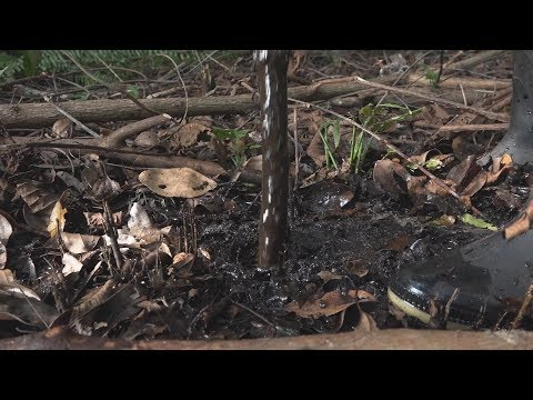 This Week on Americas Now: Amazon Contamination
