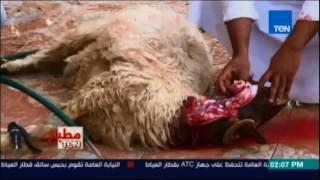 بالفيديو.. طريقة ذبح الأضحية حسب الشريعة الإسلامية