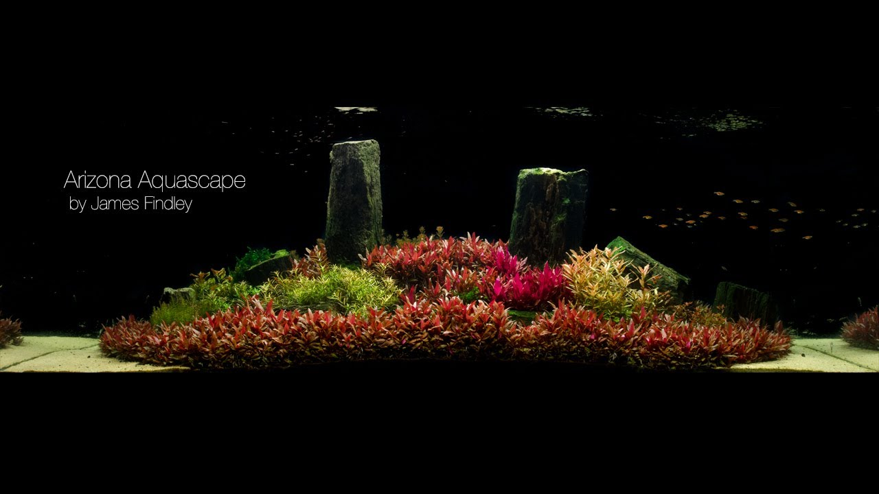 Arizona Aquascape By James Findley 1600 Litre The Making Of Youtube