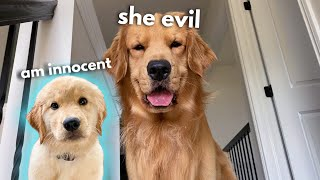 My Dog Has a Puppy Sleepover | Part 1