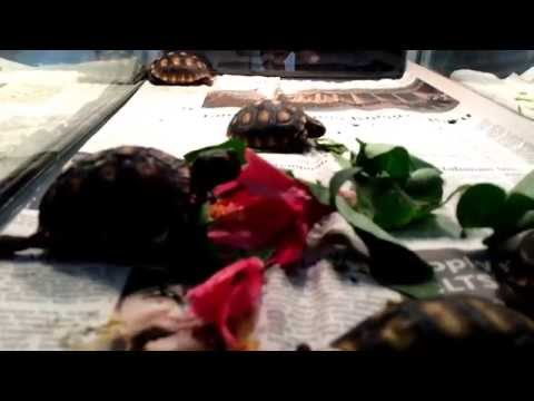 Pameran Reptil di Jakarta