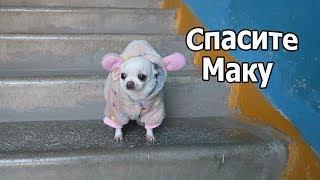 VLOG: Собаки к холодам готовы / Климу лучше / необычная бризоль